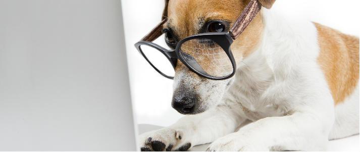 chien à l'aide d'ordinateur