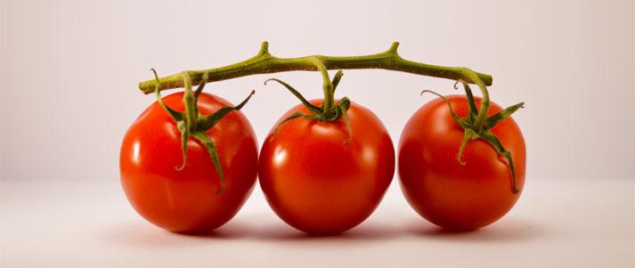 branche de tomates